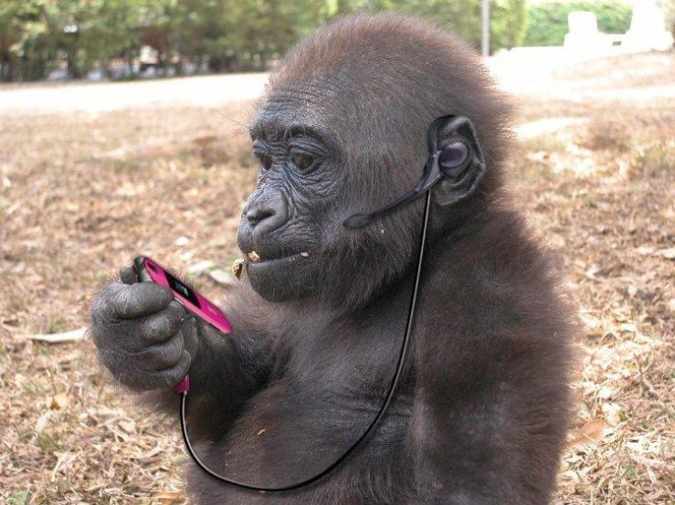 Funny Animals Using Mobiles (1)